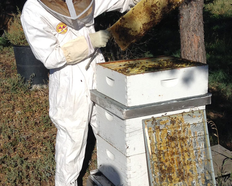 A New Home for 50,000 Honeybees